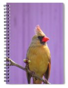 Rare Yellow Cardinal On A Cherry Branch Spiral Notebook