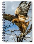 Lady Hawke Spiral Notebook