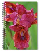 Lady In Red Iris Spiral Notebook