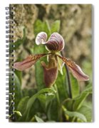 Lady Slipper 2 Spiral Notebook