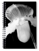 Lady Slipper Orchid Black And White Spiral Notebook