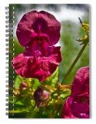 Lady Slipper Orchid Dan146 Spiral Notebook