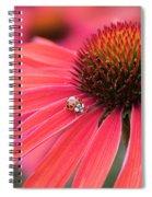 Ladybird And Echinacea Spiral Notebook