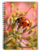 Ladybug On Fennel Spiral Notebook