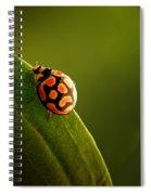 Ladybug  On Green Leaf Spiral Notebook