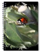 Ladybug On Sage With Swirly Framing Spiral Notebook