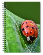 Ladybug With Dew Drops Spiral Notebook