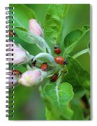 Ladybugs On Apple Blossoms Spiral Notebook