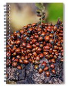 Ladybugs On Branch Spiral Notebook