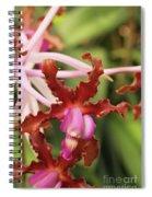 Laelia Undulata Orchid Spiral Notebook