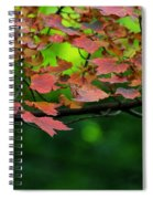 Laid Upon The Branches Spiral Notebook