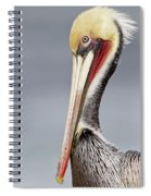 La Jolla Pelican Spiral Notebook