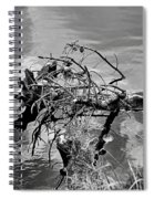 Lake Irene 12-4 Spiral Notebook