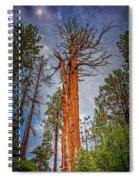 Lake Tahoe Trees On 89  Spiral Notebook