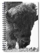 Lamar Valley Bison Black And White Spiral Notebook