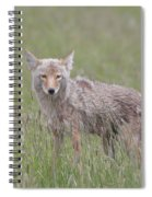 Lamar Valley Coyote Spiral Notebook