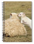 Lamb Jumping On Mom Spiral Notebook