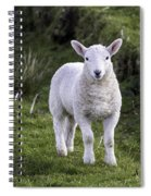 Lamb On The Isle Of Skye Spiral Notebook