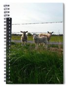 Lambs Behind The Wire Spiral Notebook
