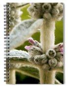Lamb's Ear Spiral Notebook