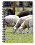 Lambswool Spiral Notebook