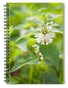 Lamium Album White Flowers Macro Spiral Notebook