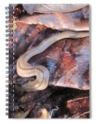 Land Planarium Spiral Notebook