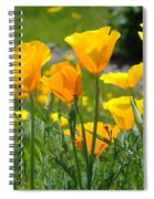 Landscape Poppy Flowers 5 Orange Poppies Hillside Meadow Art Spiral Notebook