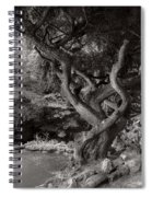Landscape - The Forbidden Forest Spiral Notebook