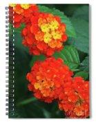 Lantana Bandana Red Flower Spiral Notebook
