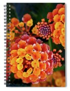 Lantana Blooms Spiral Notebook