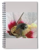 Large Bumble Bee In Flower Spiral Notebook