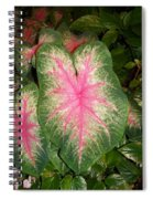 Large Coleus Plant Spiral Notebook