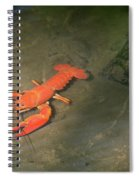 Large Crawdad Spiral Notebook