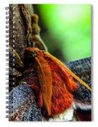 Large Moth Macro Spiral Notebook