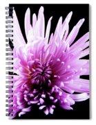Large Purple Chrysanthemum-1 Spiral Notebook