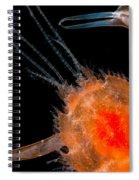 Larval Blind Lobster Spiral Notebook