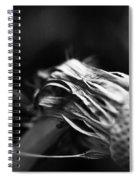 Last  Spiral Notebook