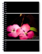 Last Of The Pink Dianthus Flowers Spiral Notebook