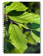 Last Of The Summer Leaves Spiral Notebook
