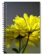 Last Rays Spiral Notebook