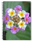 Latana Spiral Notebook
