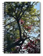 Late Afternoon Tree Silhouette With Bougainvileas II Spiral Notebook