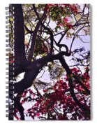 Late Afternoon Tree Silhouette With Bougainvilleas IIi Spiral Notebook