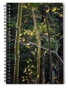 Late Aspen Spiral Notebook