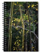 Late Aspen Spiral Notebook