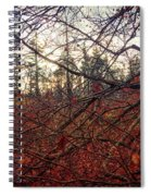 Late Autumn Morning Spiral Notebook