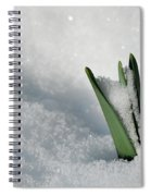 Late Snow Spiral Notebook