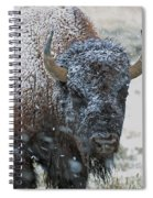 Early Spring Late Snow Buffalo Spiral Notebook
