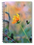 Late Summer Rain From The Forest Floor Spiral Notebook